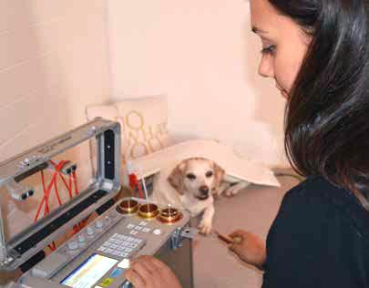 Bioresonanz Hunde und Katzen