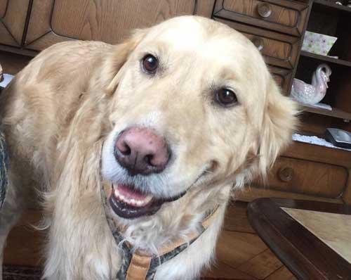 Infoblatt Stress bei Hunden