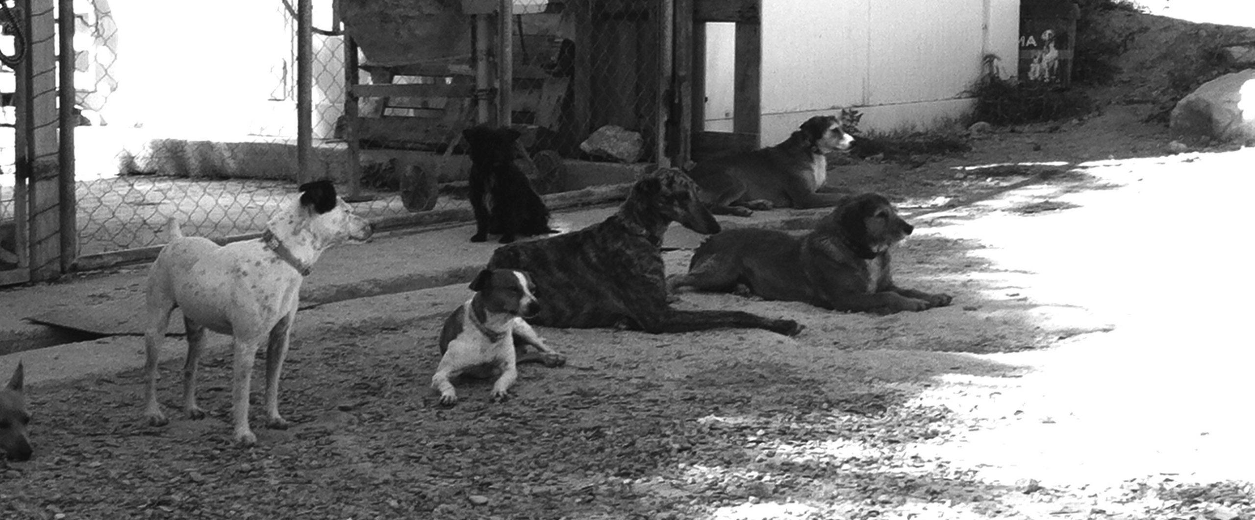 Beratung Ausland-Hunde
